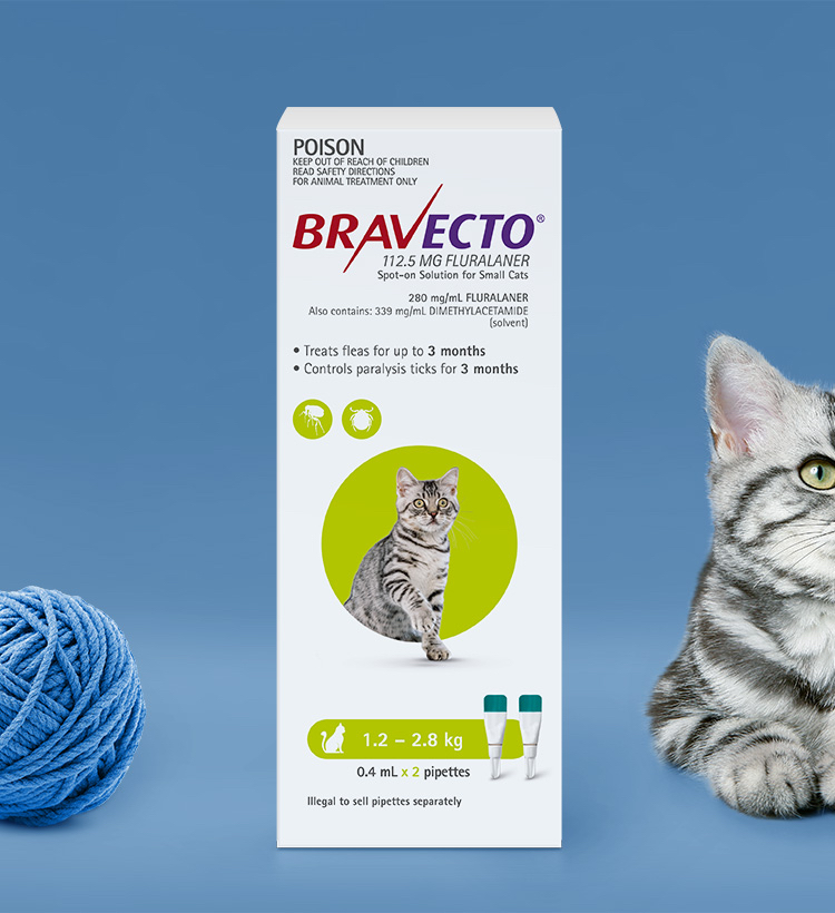 Bravecto Spot On For Cats 1.2 - 2.8 kg