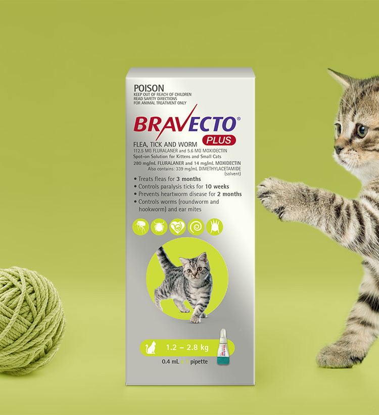 Bravecto Plus For Cats All In One Spot On Treatment For Your Cat