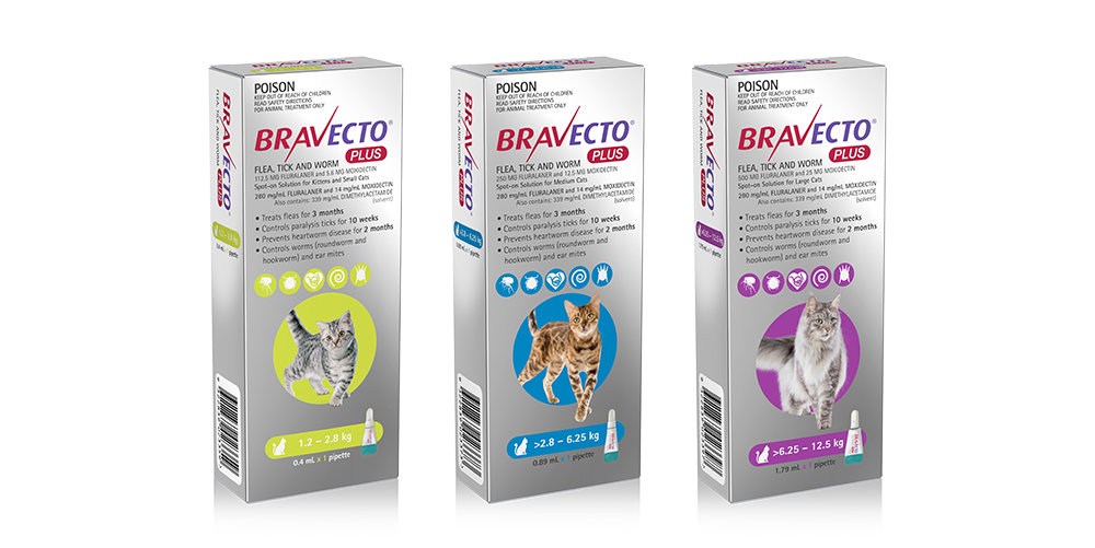 Bravecto Plus for Cats | All-in-one spot-on treatment for ...